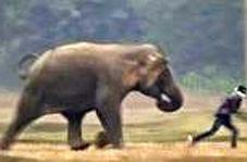 عاقبت نافرجام شوخی خطرناک جوانان هندی با فیل
