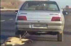 شکنجه بیرحمانه سگ زبان بسته توسط راننده خودروی سواری