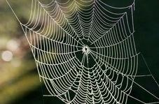 هنرنمایی حیرت انگیز عنکبوت در تار تنیدن