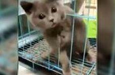 اثباتی بر مایع بودن گربه!