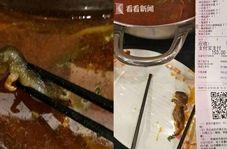پیدا شدن موش در غذا، رستوران را به هم ریخت!