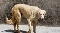 حمله سگ ولگرد به یک مرد در خیابان