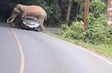حمله فیل عصبانی به یک خودرو هنگام عبور از جاده