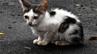 روشی جالب برای نجات گربه از مرگ بر اثر سقوط