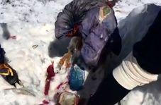 جسد کوهنورد مفقود شده پس از 31 سال پیدا شد!