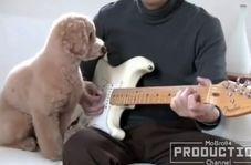 واکنش دیدنی حیوانات به موسیقی