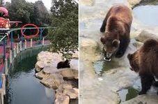 اشتباه عجیب گردشگر حین غذا دادن خرس ها!