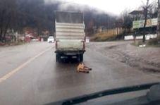 حیوان آزاری توسط راننده پیکان وانت!