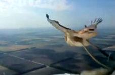 لحظه برخورد یک پرنده با پنجره جلوی هواپیما
