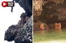 صحنه ای که موجب حیرت گردشگران خارجی در تایلند شد!