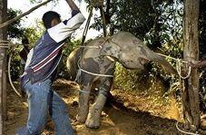 پشت صحنه سواری دادن فیل ها به انسانها