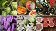 تولید میوههای عجیبی شبیه قلب و ستاره در ژاپن