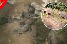 غرق شدن گله فیلها بر اثر سقوط از آبشار