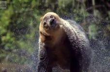 تصاویری دیدنی و زیبا از حیوانات