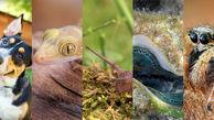 دنیا از دید حیوانات چگونه است؟