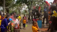 آب بازی با فیلها در تایلند به مناسبت سال جدید