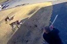 حمله سگهای وحشی به یک شهروند آمریکایی
