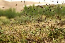 هجوم چند صد میلیونی ملخ های پرنده عربستانی به ایران
