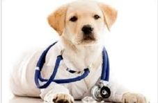 تشخیص بیماری توسط سگ ها