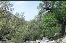 طبیعت بینظیر و دیدنی در روستای بیدرود