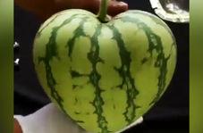 تولید محصولات کشاورزی با شکلهایی جذاب مانند قلب و ستاره!