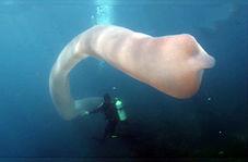 مواجه غواصان با موجود دریایی هشت متری