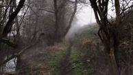 روح سرگردانی که در جنگل های انگلیس دیده شد