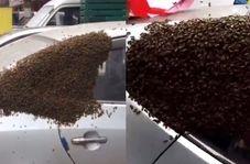 تبدیل شدن خودرو به کندوی زنبور عسل!