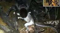 عجیبترین شکار ضبط شده دنیا