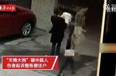 سقوط سگ موجب فلج شدن زن جوان شد!