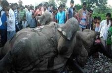 برخورد مرگبار قطار حامل سوخت با گله فیلها + فیلم
