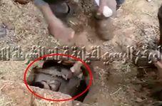 لحظه لو رفتن داعشی که مدتها مخفیانه زیر خاک زندگی میکرد!