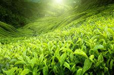 مزرعهای که تنها با آب دریا و نور خورشید تولید محصول کشاورزی میکند