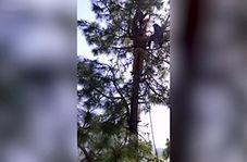 زنی که از ترس پلنگ دچار برق گرفتگی شد + فیلم