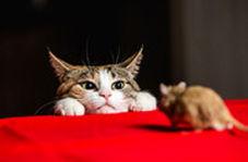 بوکس بازی دو موش برای ترساندن گربه