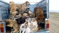 چند سگ در تهران عقیم شدهاند؟