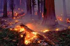 مبارزه با آتش سوزی بی سابقه در کالیفرنیا