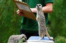 لحظه دیدنی وزن کشی حیوانات در باغ وحش