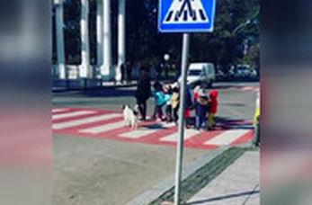 حرکت انسان دوستانه سگ ولگرد