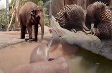 فرار حیوانات باغ وحش تارونگای استرالیا از گرما