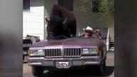 بوفالوی غولپیکر سوار بر خودروی کابوی آمریکایی!