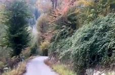 گوشهای از طبیعت پاییزی در لنگرود