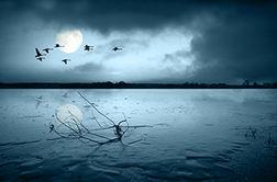 رقص زیبای پرندگان بر فراز دریا
