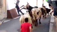 عاقبت دردناک فستیوال گاوبازی در اسپانیا