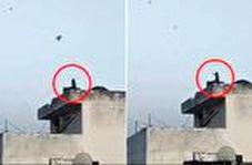 بادبادک بازی میمون در پشت بام!