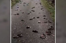 مرگ مشکوک ۳۰۰ پرنده در یک جاده