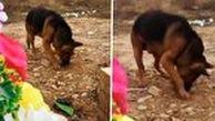 صحنه ای باورنکردنی از وفاداری یک سگ به صاحبش!