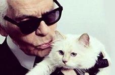 ثروتمندترین گربه دنیا!