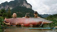 طبخ غذا با ماهی ۲۰۰ کیلویی رودخانه آمازون