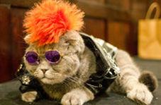 برگزاری شوی لباس گربهها در نیویورک!